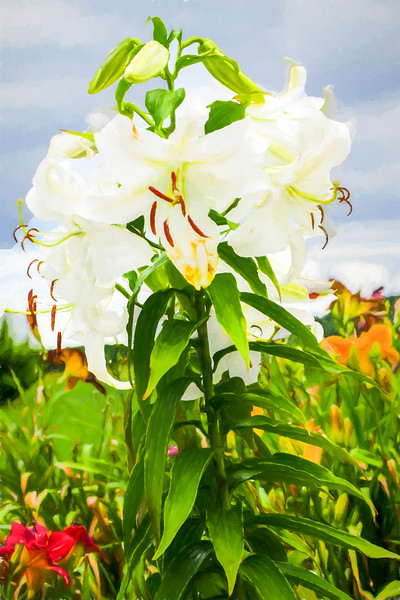 A white Lilly standing tall.