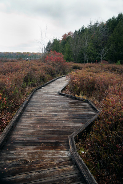A vertical stock photograph of two people walking on the boardwalk portion of the Bog Trail in Black Moshannon State Park near Philipsburg.Pennsylvania.