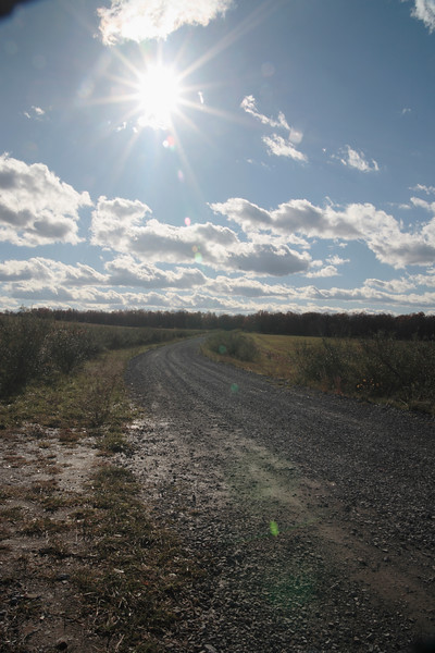 A vertical stock photograph of a dirt road through an area of reclaimed strip mine. Central Pennsylvania.