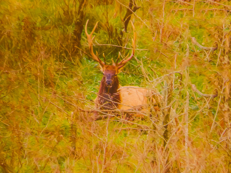 An artistic view of a large bull Elk standing alone on a hill top
