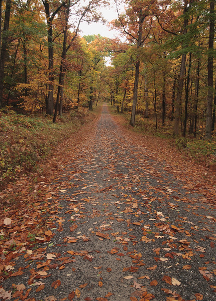 A Vertical Stock Photograph of a gravel road running through a fall hardwood forest.
