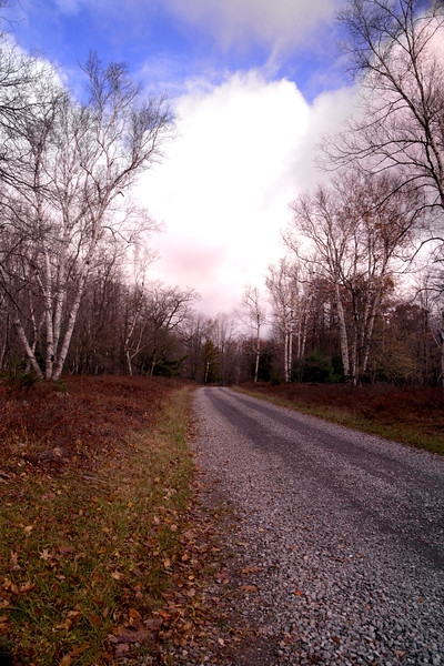 A vertical stock photo of a gravel road  running through the Marion E Brooke Natural Area, located in Elk County Pennsylvania