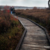 A vertical stock photograph of two people walking on the boardwalk portion of the Bog Trail in Black Moshannon State Park near Philipsburg,Pennsylvania.