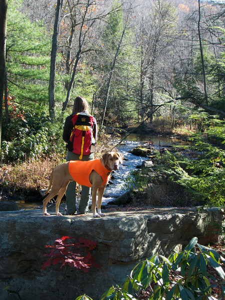A vertical stock photo of of a young lady and her dog standing on a large rock gazing into a beautiful clear trout stream, a beautiful fall day in central Pennsylvania.