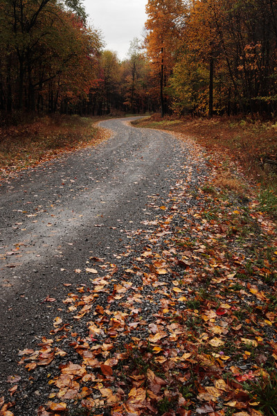 A vertical stock photo of a gravel road winding through a fall colored hardwood forest. Built in the 1930's in central Pennsylvania by the civilian conservation corp.