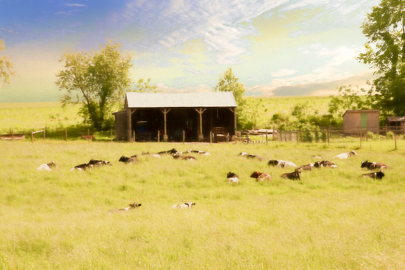 A peaceful amish farm scene.