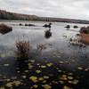 A vertical stock photo of the lake in Black Moshannon State Park near Philipsburg Pennsylvania. A late autumn overcast day.