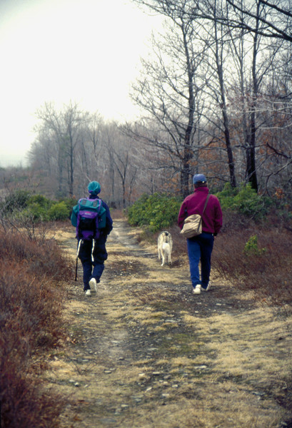 A couple walking on a grassy road with their siberian husky.