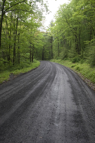 A vertical stock photograph of a winding, wet, gravel road through lush green forest in central Pennsylvania.