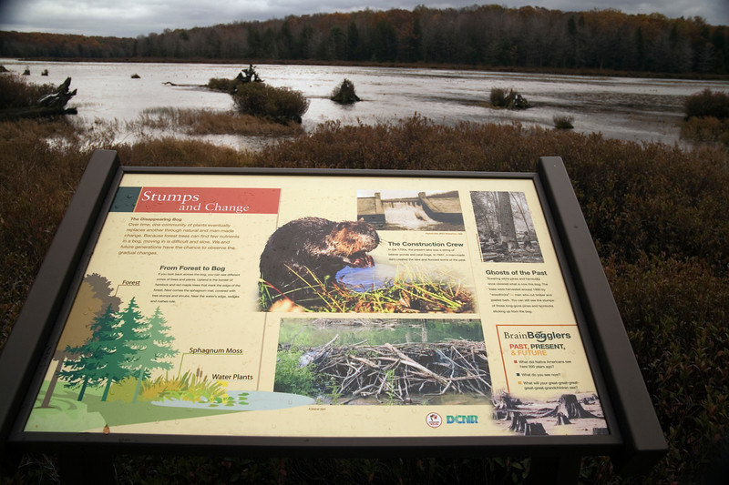 A horizontal stock photograph of signage on the Bog Trail in Black Moshannon State Park,Pennsylvania,explaining natural elements that can be found in the bog.