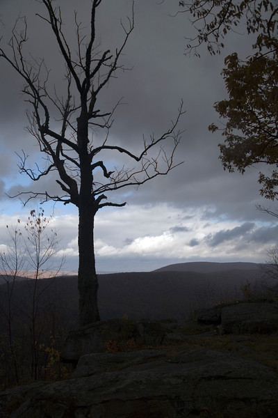 A vertical stock photograph of a leafless tree in silhouette against dark storm clouds.