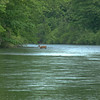 A  horizontal stock photograph of a white tail deer crossing the Susquehanna river near Clearfied Pennsylvania