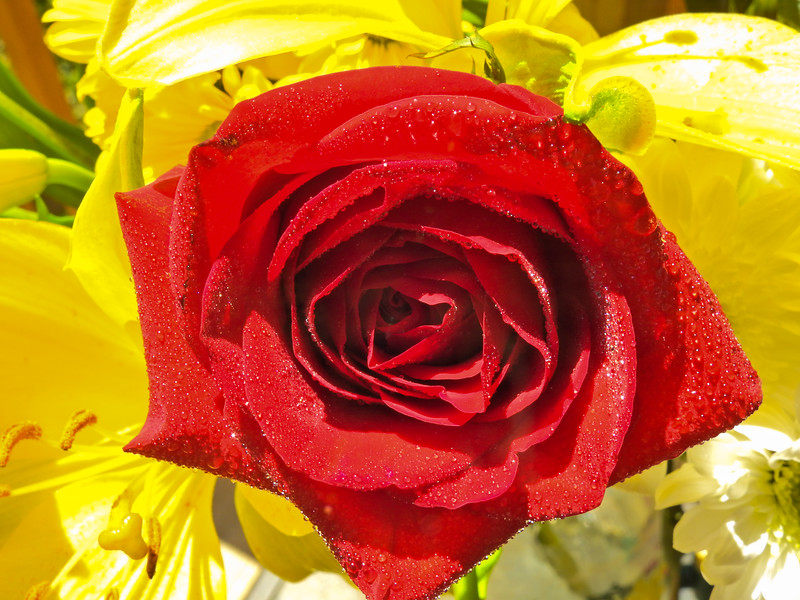 A beautiful flower arrangement,red rose,yellow lily and white Chrysanthemums