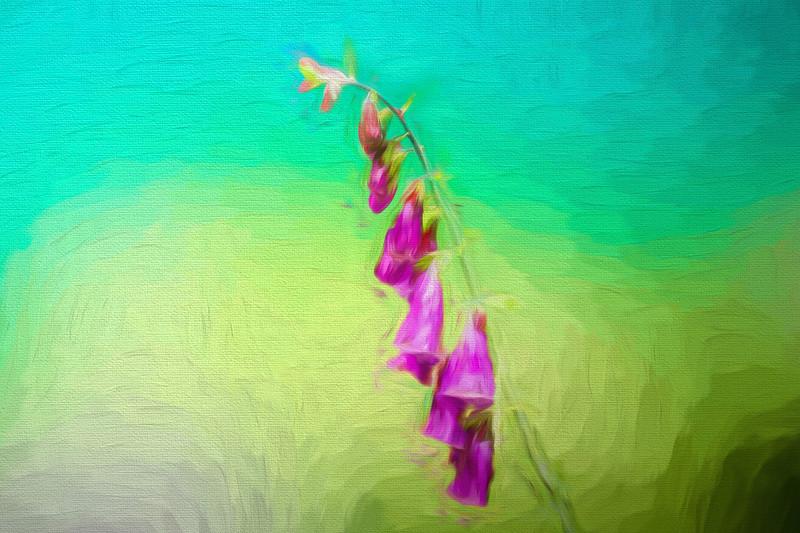 A purple wildflower.