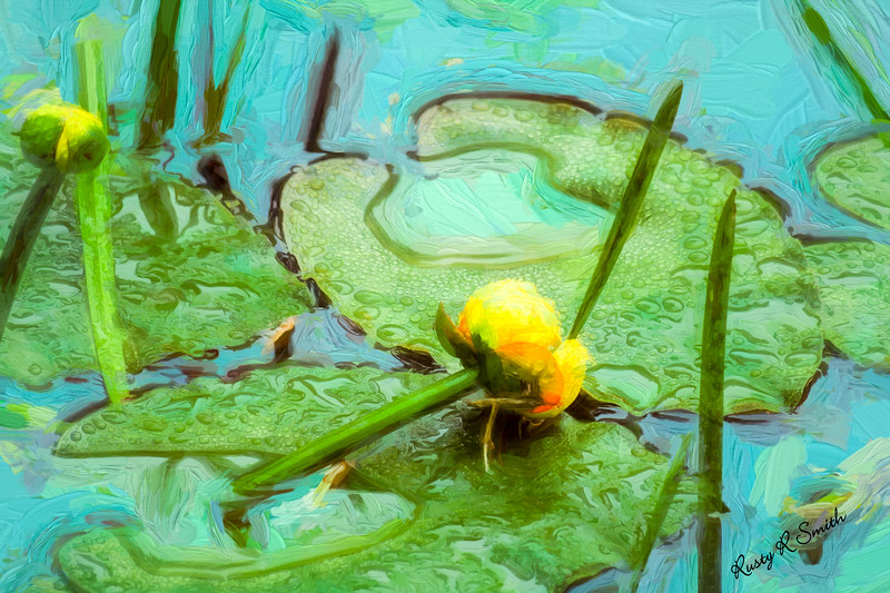 Yellow pond lilly impression.
