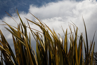 Wind in the grasses, Upper Westwood
