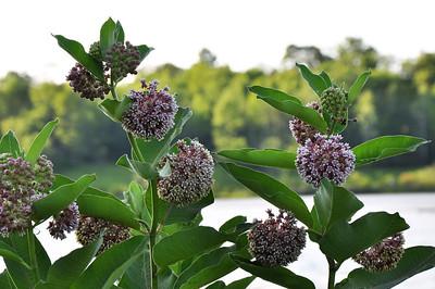 Botanical Gardens - Wisconsin