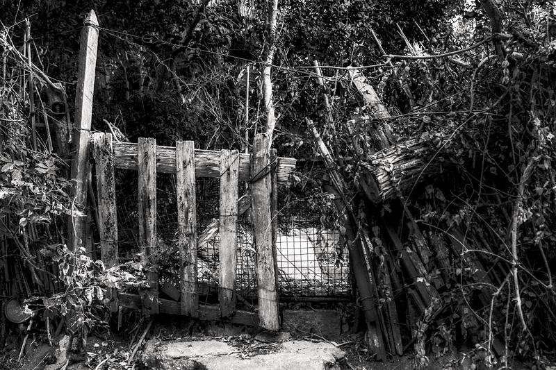 The door of the jungle