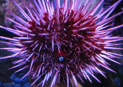 CO 2011 05 Denver Aquarium 22