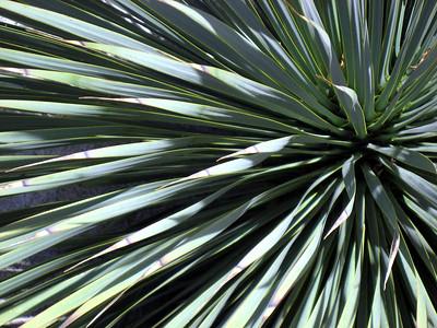 Denver Botanic Gardens 0508 (39)