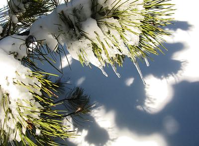 Snows 2012-13 28