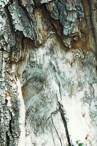 Tree Bark Aqua 1
