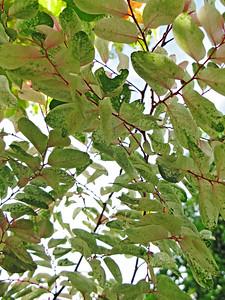 HI 2011 Maui 39