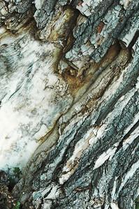 Tree Bark Aqua 2