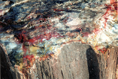 PetForest PetrifiedWood