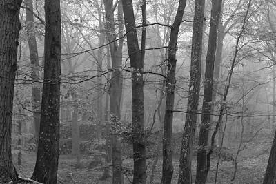 Waldstück - alte Handelsstraße