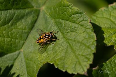 Sun Fly, Dorset