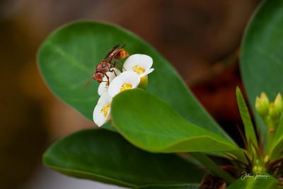 Paper Wasp, Kumaracom