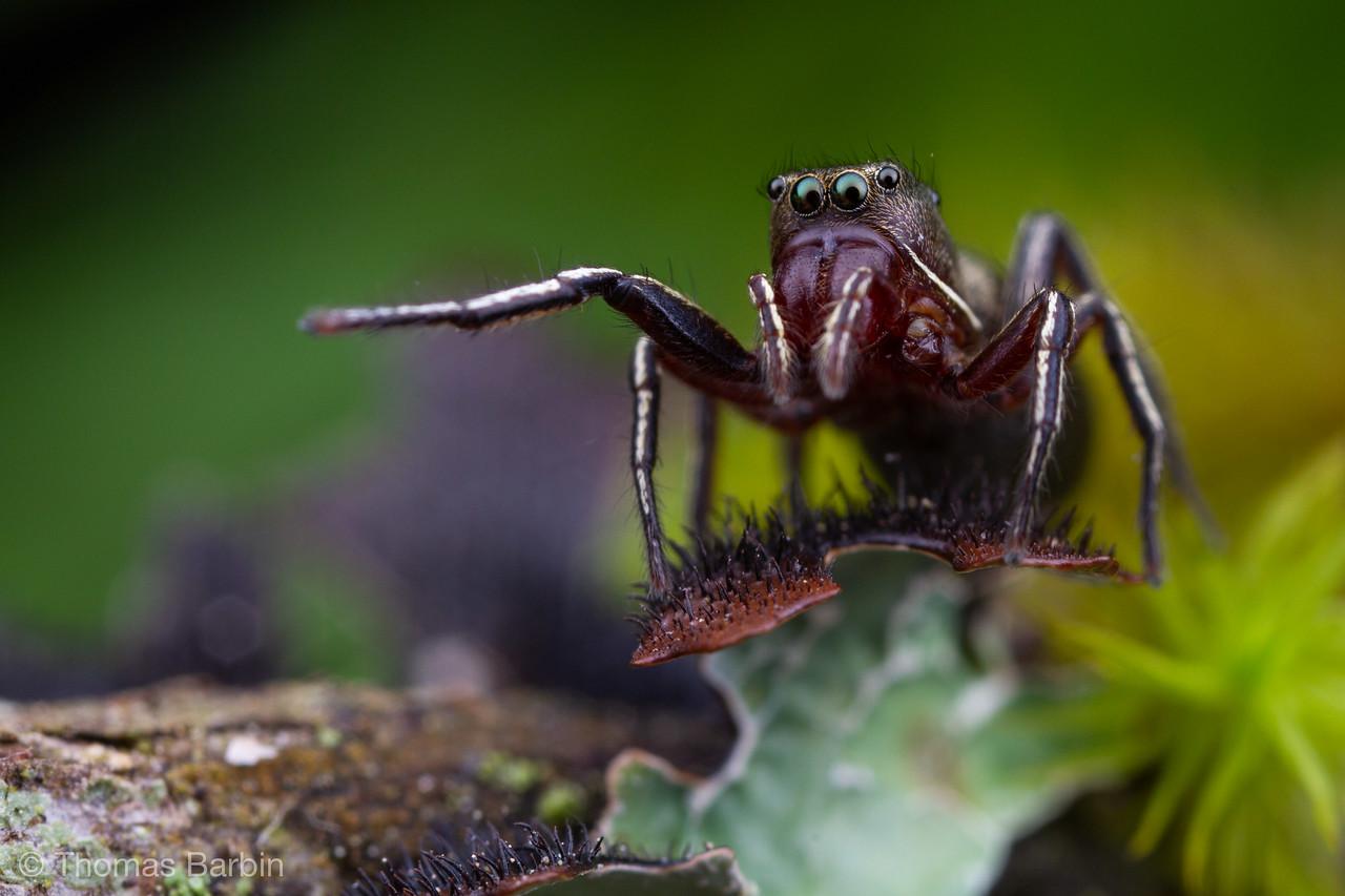 IMAGE: https://photos.smugmug.com/Arthropods/Arthropods-of-North-America/Arachnids/Spider/i-LLvR2q8/0/f70eecde/X2/20190725-_MG_0145%20macro-X2.jpg