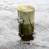 Water tap post with clear waterline showing how flood level has dropped over the past few days.