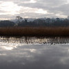 A Panorama of reeds at Portland....