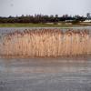 Reeds, glorious reeds...I love 'em