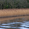 The reeds are coming back...and yet here they look dull.  Perhaps it was the light because the next shot, of reeds further back, tell a different story!