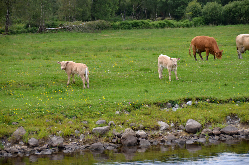 """Some of the local residents showing a keen interest in """"Arthur"""" as she passed by..."""