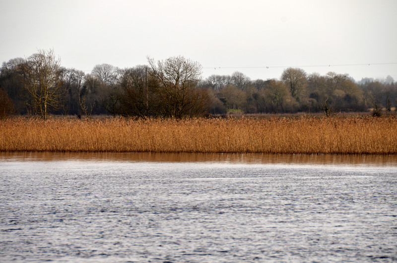 Oh how I love them reeds....especially at this time of year?