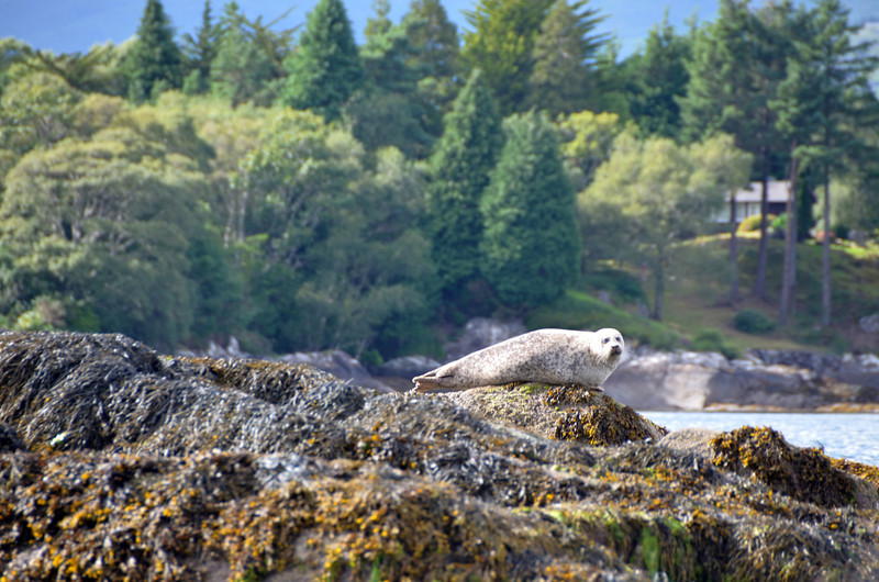 And keep your eyes peeled for the seals that inhabit the local rocks/small islands.