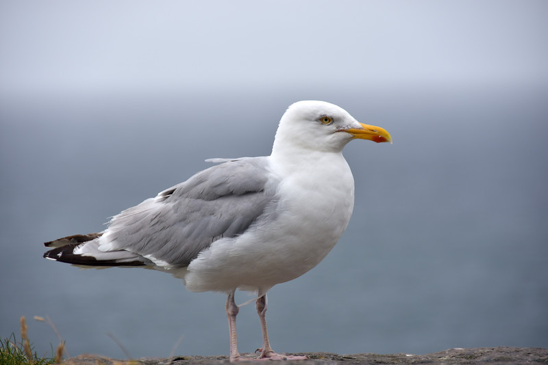 I just took the photo because the seagull was so close and stood its ground as I got out of the car!
