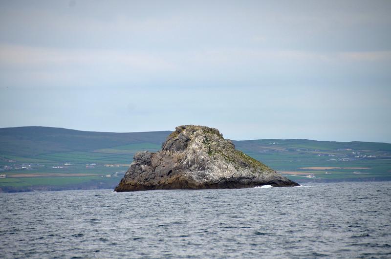 Little Samphire in Tralee Bay.