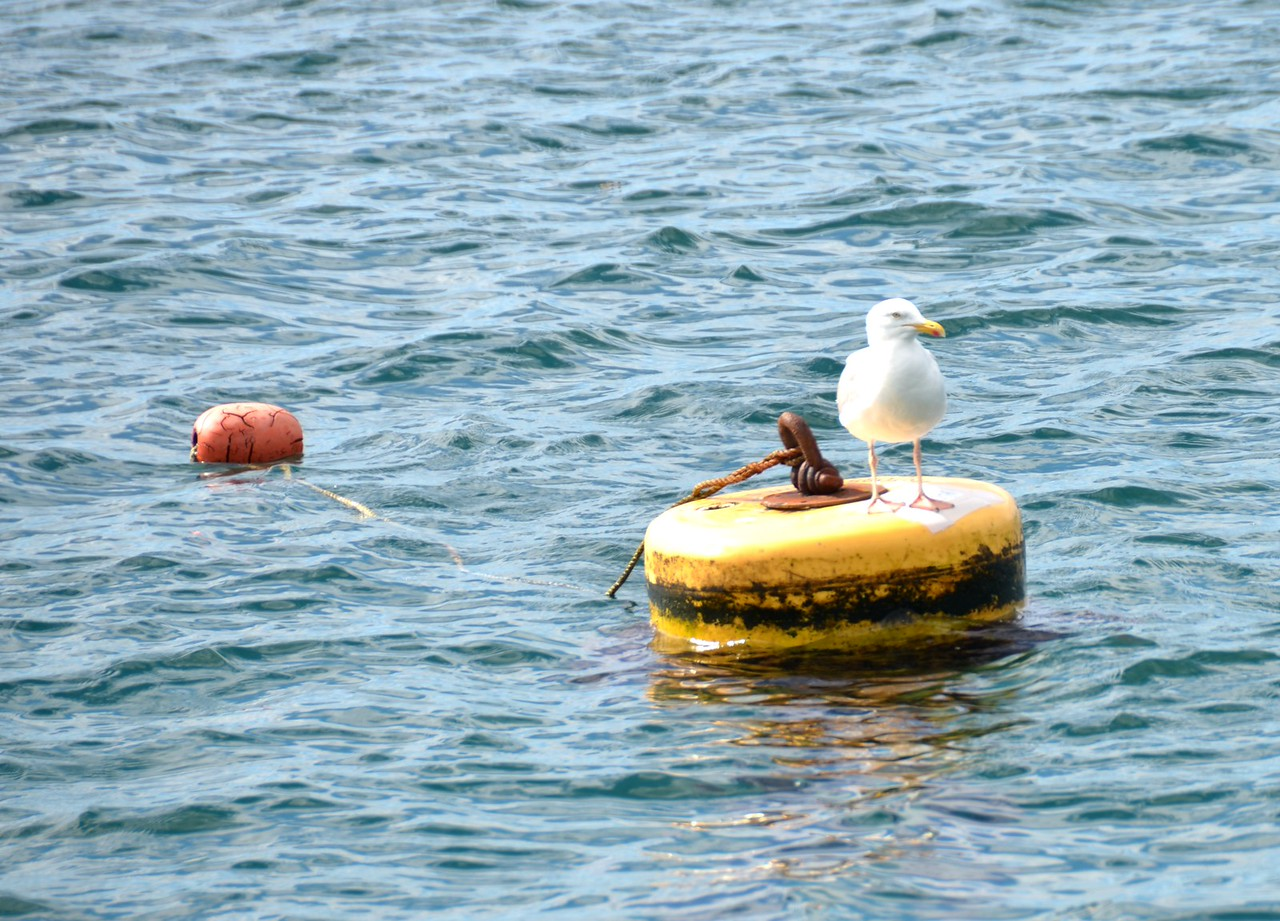 Mooring buoy (yellow) with pick-up buoy (red) attached.  We have had great fun and games (sometimes not so much fun!) trying to secure a line to a mooring buoy, despite the acquisition of a Moorfast a number of years ago.  Each time is an adventure!  And we have used various techniques / approaches over the past couple of years. Still trying to perfect it!