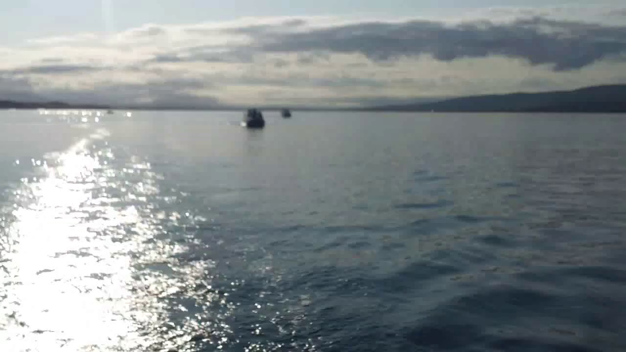 VIDEO<br /> <br /> circa 08:13... click the above image to view a 30 second video clip of Cool Runnings and Snow Mouse as they depart Fenit Harbour. When the video is 'Loaded' you will need to click on the 'Play' button to start the video playback.<br /> <br /> NOTE that viewing the video will cause another page to open in which the video will play. To return to the PhotoJournal click on the X at top right-hand corner of the video page OR hit the 'Back' button on your browser.