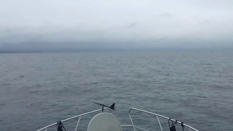 VIDEO<br /> <br /> circa 11:26... On the approach to Fenit...Samphire Island ahead but not clearly visible yet. Click the above image to view a 49 second video clip. First 20 secs of the audio is significantly impacted by wind... :-(  <br /> <br /> When the video is 'Loaded' you will need to click on the 'Play' button to start the video playback.<br /> <br /> NOTE that viewing the video will cause another page to open in which the video will play. To return to the PhotoJournal click on the X at top right-hand corner of the video page OR hit the 'Back' button on your browser.