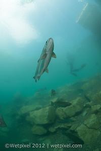 120512-D800 underwater 2-0921-2