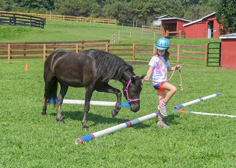 A young handler introduces Dartmoor Pony Shadow to agility poles