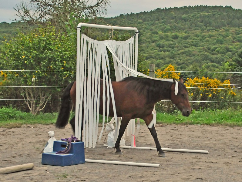 Brandy goes through the ribbon curtain by choice and with confidence