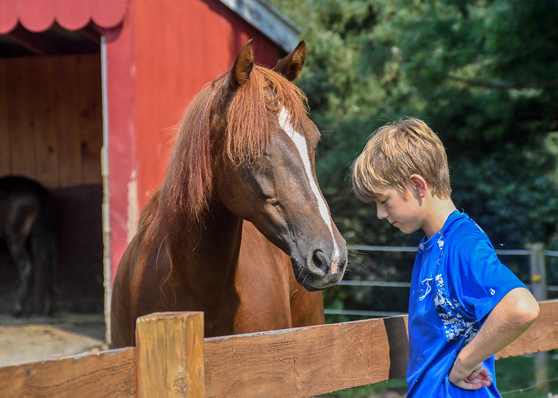 Unthreatening posture invites an anxious horse to approach