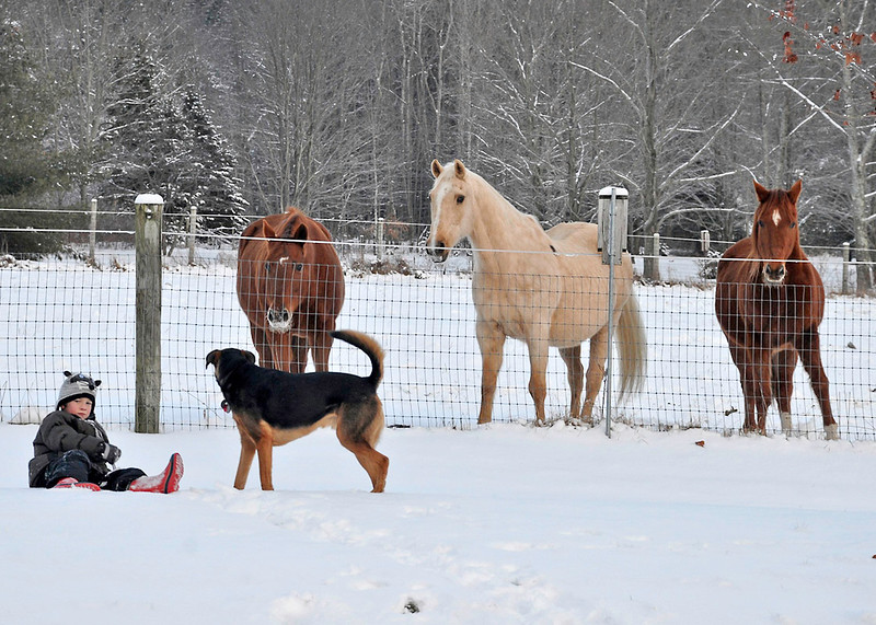 Shiloh, Sapphire, and Bronzz watch our grandson and puppy play in the snow